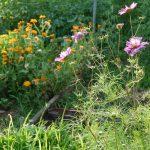 Association fleurs et légumes jardin maison d'hôtes